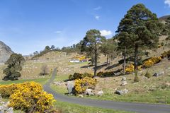 Idylic pittoresk bergstuga i Irland Fotografering för Bildbyråer
