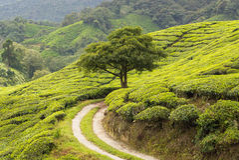 Idylic scenery with tree Stock Photo