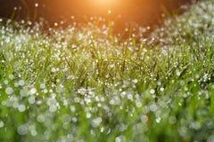 Idylic summer morning in garden Stock Image