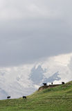 Idyll. The Idyllic landscape in Caucasus Mountains in Summer Stock Photo