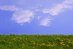 Idyll. Blue sky and green meadow Stock Images