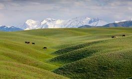 Idyll alpino Imagens de Stock Royalty Free