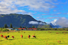 The idyll in Chilean Patagonia Royalty Free Stock Images