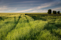 Idyll countryside view of lush meadows Royalty Free Stock Images
