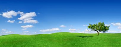 Idyll, panoramic landscape, lonely tree among green fields. Blue sky and white clouds in the background stock photo