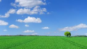 Idyll, panoramic landscape, lonely tree among green fields. Blue sky and white clouds in the background stock photos