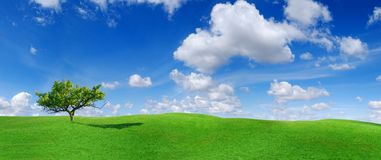 Idyll, panoramic landscape, lonely tree among green fields. Blue sky and white clouds in the background royalty free stock images