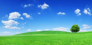 Idyll, panoramic landscape, lonely tree among green fields. Blue sky and white clouds in the background stock images