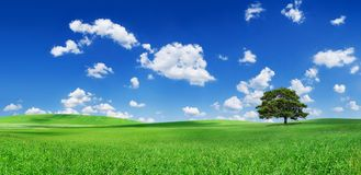 Idyll, lonely tree among green fields. Idyll, panoramic landscape, lonely tree among green fields, blue sky and white clouds in the background stock photo