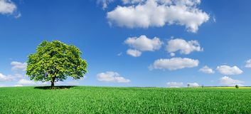 Idyll, panoramic landscape, lonely tree among green fields. Blue sky and white clouds in the background stock photography