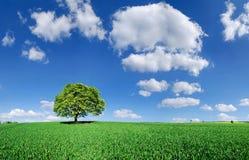 Idylle, eenzame boom onder groene gebieden stock foto's