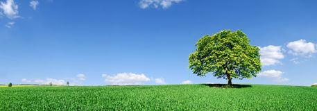 Idylle, panoramisch landschap, eenzame boom onder groene gebieden stock afbeeldingen