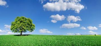 Idylle, panoramisch landschap, eenzame boom onder groene gebieden stock fotografie