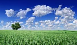 Idylle, panoramisch landschap, eenzame boom onder groene gebieden royalty-vrije stock foto's