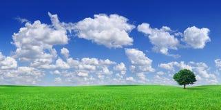 Idylle, panoramisch landschap, eenzame boom onder groene gebieden stock foto's