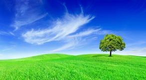 Idylle, panoramisch landschap, eenzame boom onder groene gebieden royalty-vrije stock afbeeldingen