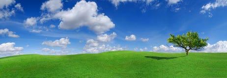 Idylle, paysage panoramique, arbre isolé parmi les champs verts photos stock