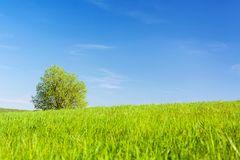 Idyllic agricultural landscape Royalty Free Stock Photography