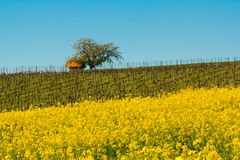 Idyllic agriculture field Stock Photography