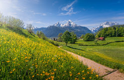 Idyllic alpine landscape with blooming meadows and snow-covered mountain tops Stock Photography