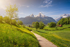 Idyllic alpine landscape with blooming meadows and snow-covered mountain tops Stock Photo