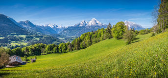 Idyllic alpine landscape with green meadows, farmhouses and snow-capped mountain tops Royalty Free Stock Photo