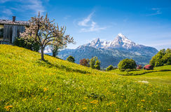 Idyllic alpine landscape with green meadows, farmhouses and snowcapped mountain tops Stock Images