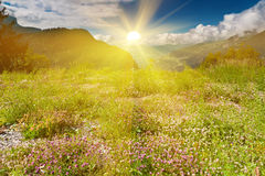 Idyllic Alpine scene in sun rays. Idyllic Alpine scene. Flowers in grass of meadow on green mountain slope under sun rays. Apls in summer Stock Image