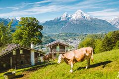 Free Idyllic Alpine Scenery With Mountain Chalets And Cow Grazing On Green Meadows In Springtime Stock Image - 169408791