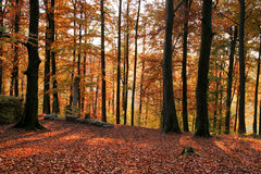 Idyllic autumn forest scenery Stock Photography
