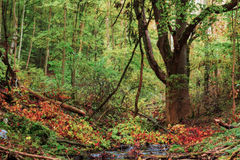 Idyllic Autumn Forrest Royalty Free Stock Photos