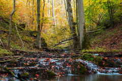 Idyllic Autumn Forrest Royalty Free Stock Images