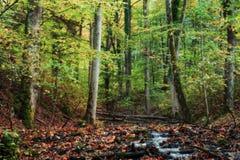 Idyllic Autumn Forrest Stock Image