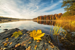 Idyllic autumn lake scenery with maple leaf on the rock Royalty Free Stock Photos
