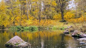 Idyllic autumn water landscape. Colorful idyllic beautiful water landscape in autumn with water flowing calmly in a river on background of trees with yellow stock video footage