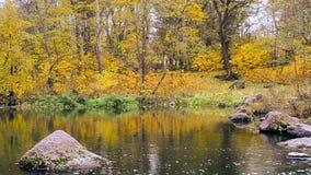 Idyllic autumn water landscape stock video footage