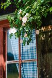 Idyllic Bavarian alpine cottage. Window with curtains and wild roses Royalty Free Stock Photo