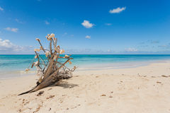 Idyllic beach with clear water Royalty Free Stock Image