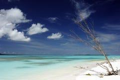 Idyllic beach in New Caledonia. Idyllic white sand beach in New Caledonia Royalty Free Stock Images
