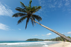 Idyllic beach with palm. Sri Lanka. Tropical paradise idyllic beach with palm. Sri Lanka Royalty Free Stock Photo