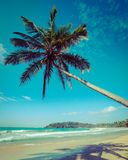 Idyllic beach with palm. Sri Lanka Stock Photography