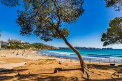 Beach view at seaside of Peguera on Majorca, Spain Mediterranean Sea. Idyllic beach Platja la tora at Paguera bay, Mallorca, Spain Balearic Islands royalty free stock image