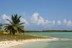 Idyllic beach scene. In Bahamas Stock Photography