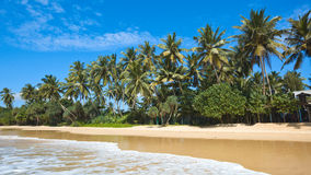 Idyllic beach. Sri Lanka Royalty Free Stock Photos