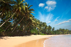 Idyllic beach. Sri Lanka Royalty Free Stock Image