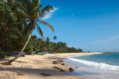 Idyllic beach. Sri Lanka. Tropical paradise idyllic beach. Sri Lanka royalty free stock photo