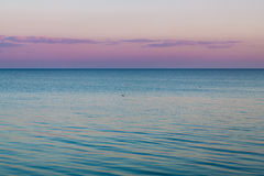 Idyllic calm sea horizon landscape with seagulls background Stock Photography