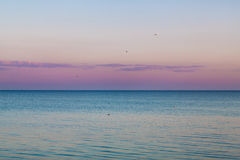 Idyllic calm sea horizon landscape with seagulls background Stock Image