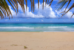 Idyllic Caribbean beach bordered above by palm frond Royalty Free Stock Image