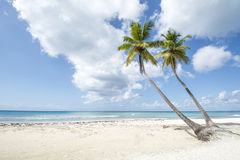 Idyllic Caribbean coastline Royalty Free Stock Photo